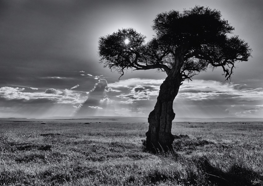 Kenya, Black and White, Nature Photography, Metamorphosis, #NAF18