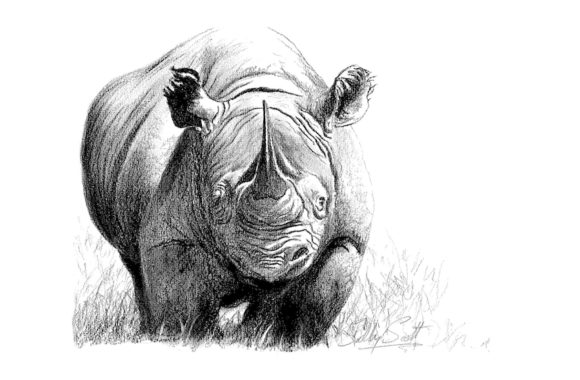 Rhino Prints by Sally Scott